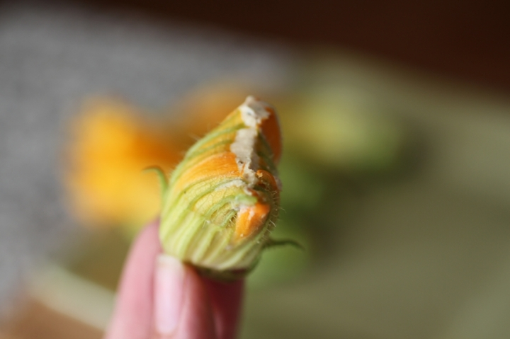 Truffled Ricotta Stuffed Zucchini Blossoms Girl Eats Greens_0014