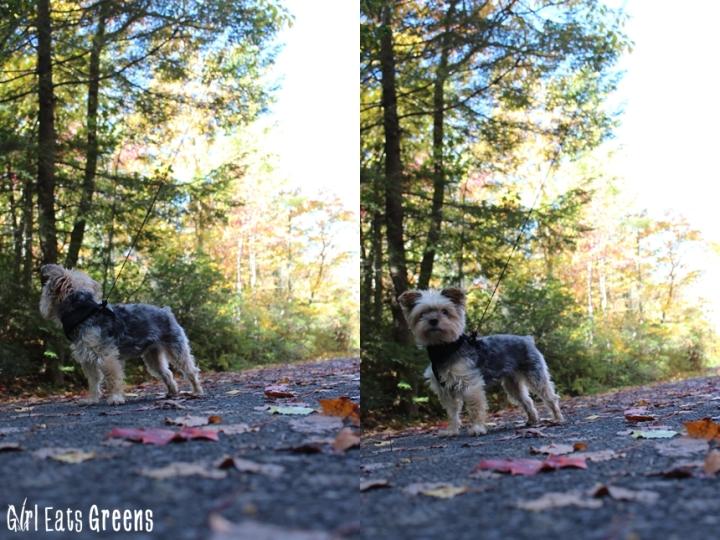 New Paltz New York NY Minnewaska State Park Hiking Girl Eats Greens_0010