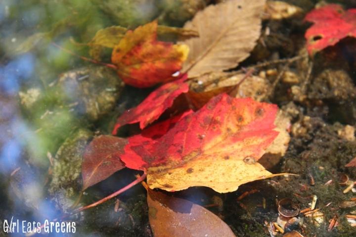 New Paltz New York NY Minnewaska State Park Hiking Girl Eats Greens_0024